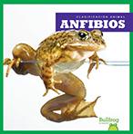 286062 anfibios