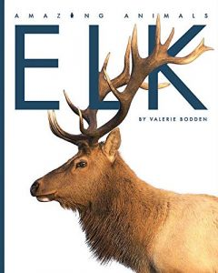 9781640260351 amazing animals elk