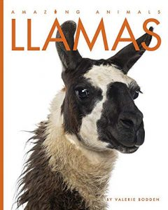 9781640260375 amazing animals llamas