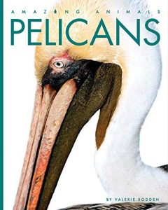9781640260382 amazing animals pelicans