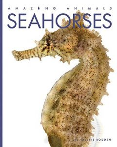 9781640260405 amazing animals seahorses