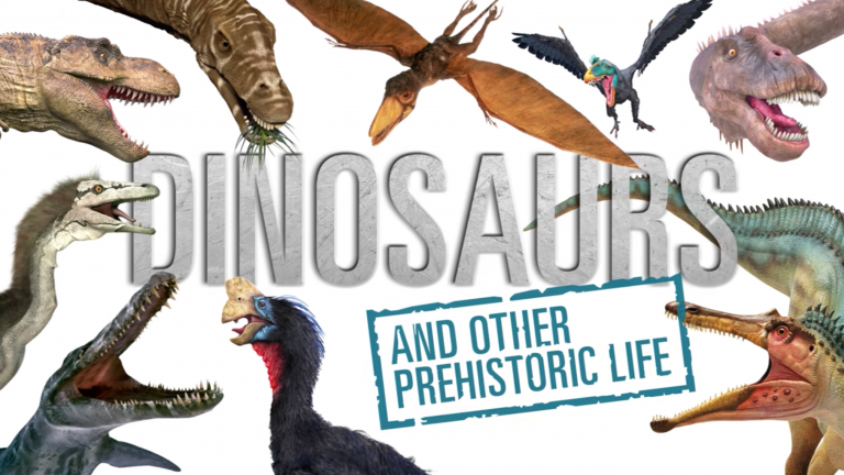 DK Find Out Web Site DINOSAURS Animated Video
