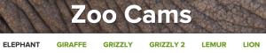 Zoo Cams