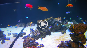 shedd aquarium live cam